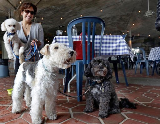 May 19, 2015 file photo: Michelle Vargas, with her dogs in a Manhattan park, on New York's Upper West Side. (AP Photo/Richard Drew, File)