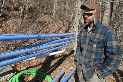In this March 4, 2016, photo, Mike Chiberton, general manager of Crown Maple's southern Vermont operation, stands near sap and vacuum lines running to maple trees in Sandgate, Vt. (AP Photo/Lisa Rathke)