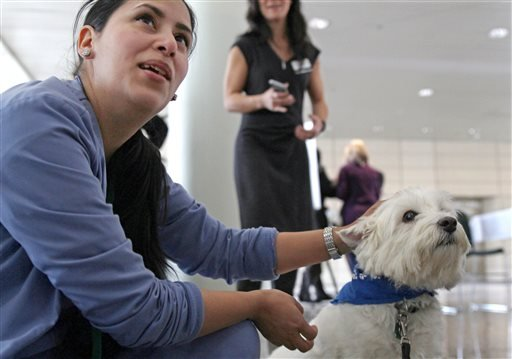 In this Feb. 18, 2016 photo, medical assistant Eloise Olmos pets Dallis the Westie at Rush University Medical Center in Chicago. (AP Photo/Carrie Antlfinger)
