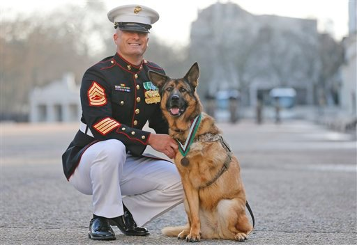 Lucca completed over 400 separate missions in Iraq and Afghanistan during six years of active service protected the lives of thousands of troops, with her heroic actions recognised by the UK's leading veterinary charity, PDSA. (AP Photo/Frank Augstein)