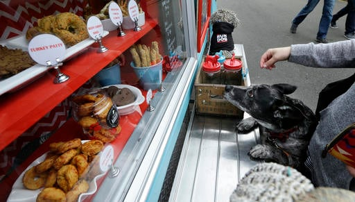 April 5, 2016 photo, Maya, an Australian cattle dog mix owned by Meagan Dumford, eyes treats in the display case of a food truck specializing in treats for dogs in Lynnwood, Wash. (AP Photo/Ted S. Warren)