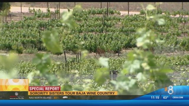 Baja Wine Country: Popular tasting tours depart from San Diego