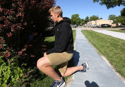 In this May 5, 2016 photo, Manhattan High School student Hayden Dwinner, 15, sets his mosquito larva collection cup in a bush outside his school in Manhattan, KS. The mosquitoes that can spread the disease Zika are already buzzing in places around the Uni