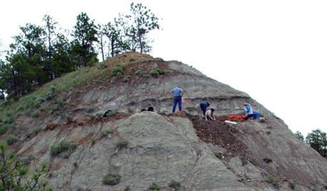 This June 16, 2006 photo provided by the Canadian Museum of Nature shows the hillside excavation site where dinosaur bones belonging to Spiclypeus shipporum were unearthed, in Winifred, Mont.