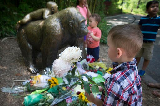 A boy brings flowers to put beside a statue of a gorilla outside the shuttered Gorilla World exhibit at the Cincinnati Zoo & Botanical Garden, Monday, May 30, 2016, in Cincinnati.