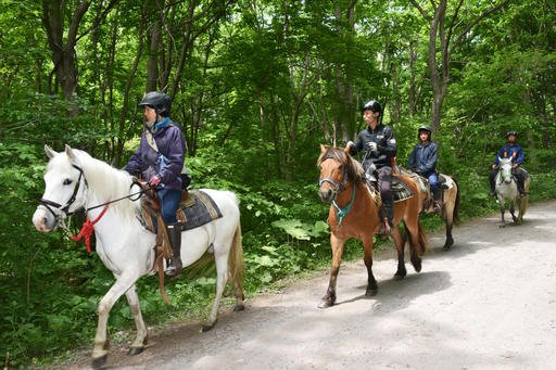 Rescuers on horseback search for a 7-year-old boy who is missing in a Japanese forest in Nanae town, on Hokkaido, the northernmost of Japan's four main islands Monday, May 30, 2016.