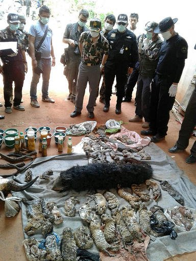 """In this photo released by the Department of National Parks, Wildlife and Plant Conservation, officials look at the remains of tiger cubs and a bear laid out at the """"Tiger Temple"""" in Saiyok district in Kanchanaburi province."""