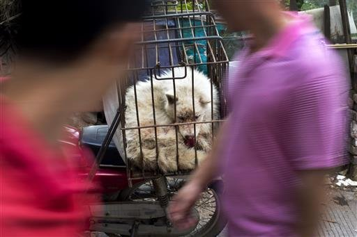 People walk past a dog in a cage for sale at a market during a dog meat festival in Yulin in south China's Guangxi Zhuang Autonomous Region, Tuesday, June 21, 2016.