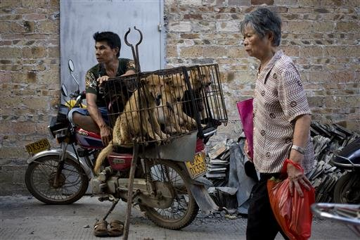 A woman walks past a dog vendor waits for buyers next to the dogs in a cage for sale at a market during a dog meat festival in Yulin in south China's Guangxi Zhuang Autonomous Region, Tuesday, June 21, 2016.