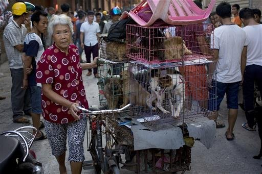 A woman with a load of dogs on her tricycle cart arrives at a market for sale during a dog meat festival in Yulin in south China's Guangxi Zhuang Autonomous Region, Tuesday, June 21, 2016.
