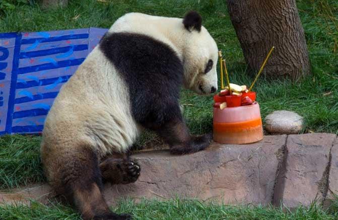 Image: San Diego Zoo
