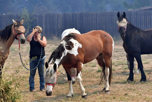 Hannah Lee coordinates with a friend to save horses as flames approach the town of Lower Lake, Calif. on Sunday, Aug. 14, 2016. (AP Photo/Josh Edelson)