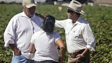 In this photo taken Wednesday, Sept. 30, 2009, from left, Juan Atayde, Maria Martinez and Ladislao Angeles converse in a strawberry field in Salinas, Calif. (AP Photo/Marcio Jose Sanchez)