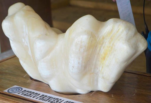 In this photo provided by Puerto Princesa Tourism Office, a giant pearl measuring 30cm wide (1ft), 67cm long (2.2ft) and weighing 34kg (75lb) is displayed.
