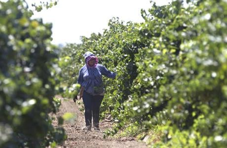 The state Senate approved AB1066, by Assemblywoman Lorena Gonzalez, D-San Diego, Monday, Aug. 22, 2016, that would require farmworkers to receive overtime after working eight hours. The measure now goes to the Assembly.(AP Photo/Rich Pedroncelli)