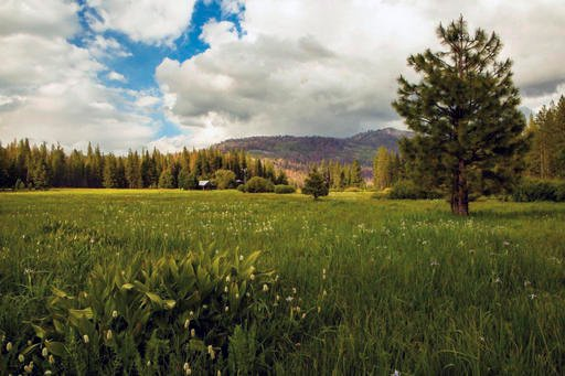 This undated photo provided by The Trust for Public Land shows Ackerson Meadow in Yosemite National Park, Calif. Visitors to the park now have more room to explore nature with the announcement on Wed. Sept. 7, 2016 that the park's western boundary has exp