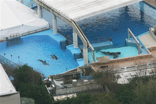 Three killer whales swim in tanks at the SeaWorld park in Orlando, Fla. on Wednesday, Feb. 24, 2010.