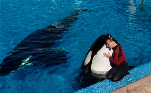 In this photo taken on Dec. 30, 2005, Dawn Brancheau, a whale trainer at SeaWorld Adventure Park, is shown while performing.