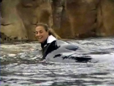 This Wednesday, Feb. 24, 2010 photo made from video provided by Todd Connell shows trainer Dawn Brancheau and Tilikum before the incident in which the killer whale pulls her into the water and kills her at SeaWorld in Orlando, Fla.