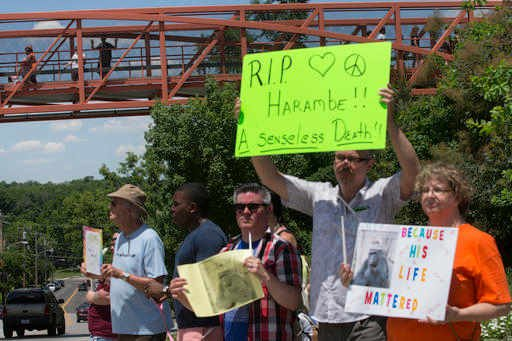 In This May 30, 2016 file photo, zoo visitors look at protestors and mourners from a walk bridge during a vigil for the gorilla Harambe outside the Cincinnati Zoo & Botanical Garden, in Cincinnati.