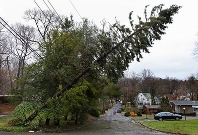 A tree is held up by powerlines Sunday, March 14, 2010, in Hartsdale, N.Y., after storms ripped through sections of the Northeast. (AP Photo/Craig Ruttle)