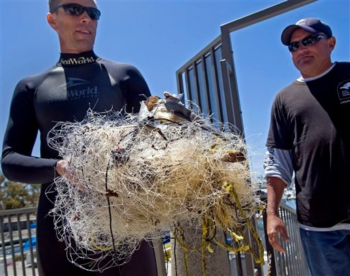 Eric Otjen of the mammal department at Sea World, San Diego displays the debris and netting that was removed from the body of a young gray whale in Dana Point Harbor Wednesday.