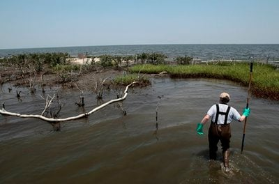 Douglas Inkley, with the National Wildlife Federation, works near an island impacted by oil from the Deepwater Horizon oil spill in Barataria Bay just inside the coast of Louisiana, Tuesday, May 25, 2010.