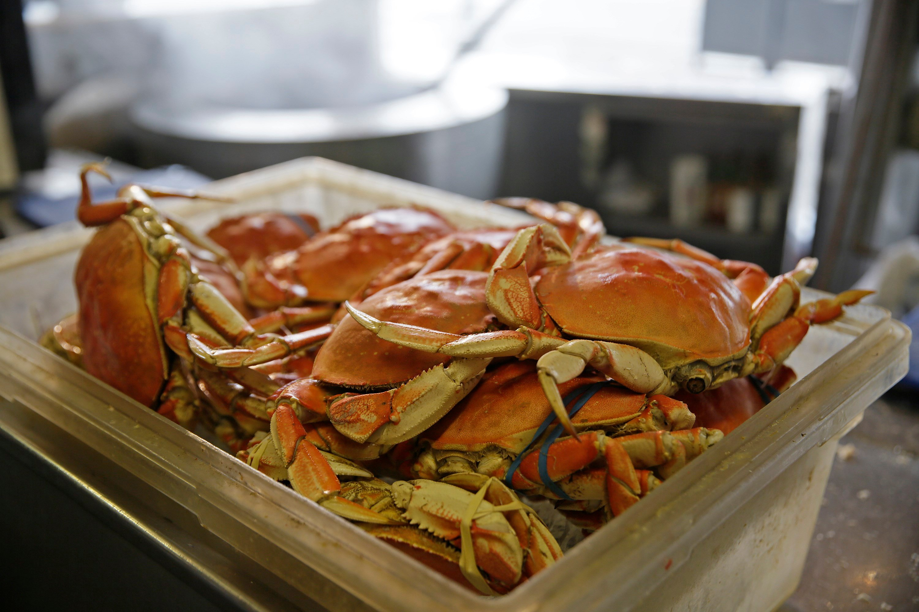 The strike started Dec. 28, 2016, after Pacific Choice Seafood in Humboldt County, Calif., offered to pay $2.75 a pound for the tasty crustacean. Crabbers whose seasons had already opened had negotiated a price of $3 per pound. (AP Photo/Eric Risberg)