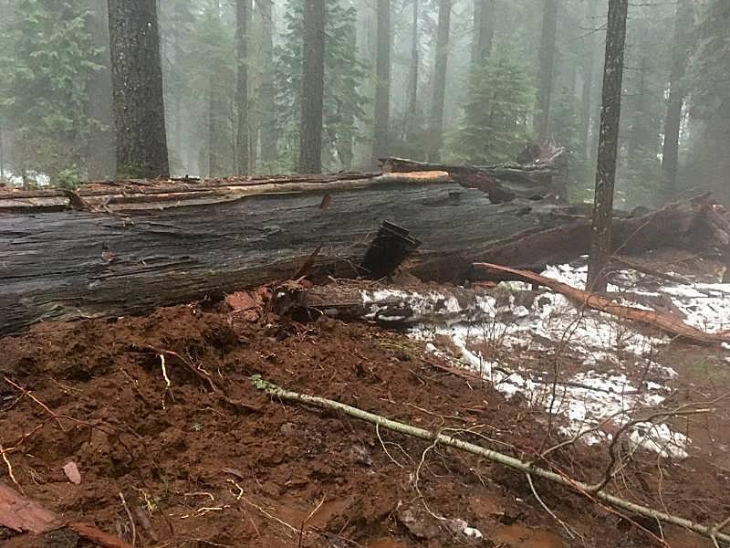 Photo by Jim Allday/Calaveras Big Trees Association Facebook page
