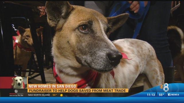 Fundraiser to help dogs saved from meat trade
