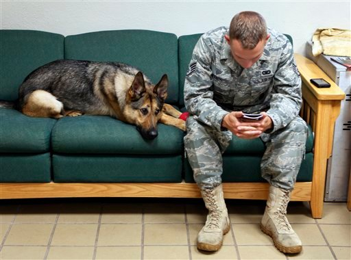 In this photo taken Thursday, July 29, 2010, Gina, a highly trained bomb-sniffing dog with the U.S. military, joins Staff Sgt. Chris Kench on a sofa at the kennel at Peterson Air Force Base in Colorado Springs.