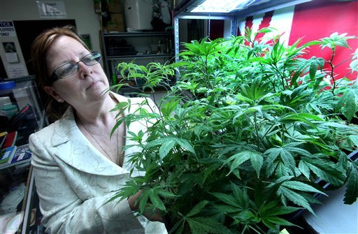 Lanette Davies, co-owner of CANNA CARE, a medical marijuana shop, looks at some young marijuana plants at their facility in Sacramento, Calif., Tuesday, Sept. 21, 2010. (AP Photo/Rich Pedroncelli)