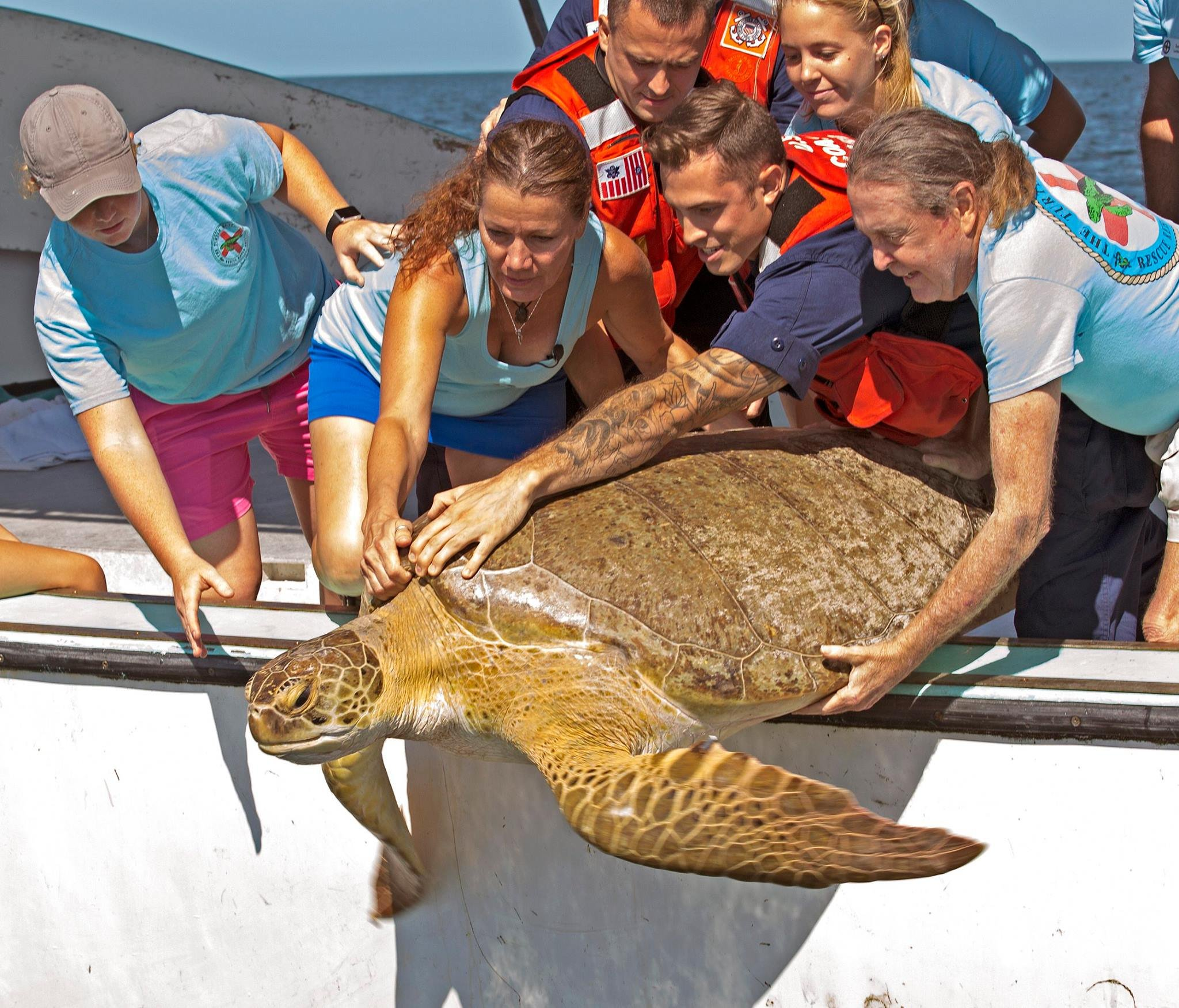 "In this photo provided by the Florida Keys News Bureau, Florida Keys-based Turtle Hospital and U.S. Coast Guard staff release ""Jolly,"" a 330-pound-female green sea turtle, off the Florida Keys near Marathon, Fla., Friday, March 10, 2017. (Mariela Care/Flo"
