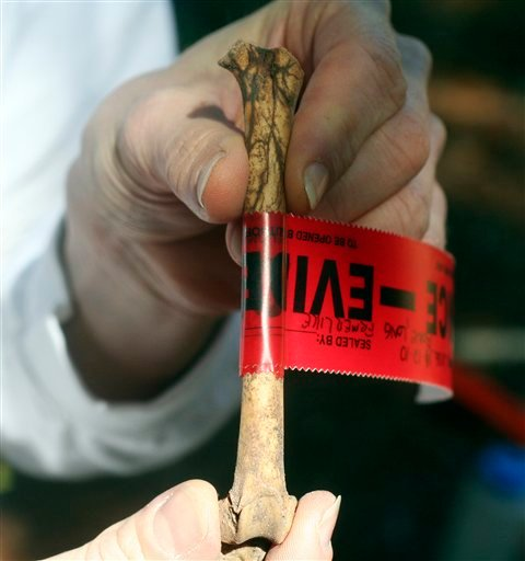 In this Nov. 12, 2010 photo, a femur bone from a cat has been marked as evidence at a crime scene staged for a veterinary forensics exercise at the University of Florida in Gainesville, Fla. ( AP Photo by Tamara Lush)