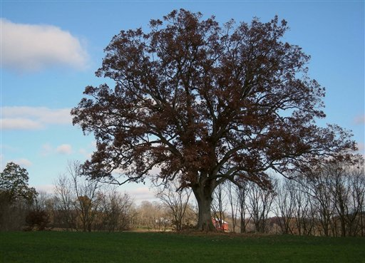 An oak tree outside Ohio's Malabar Farm State Park in north-central Ohio played a key role in the the 1994 film The Shawshank Redemption.