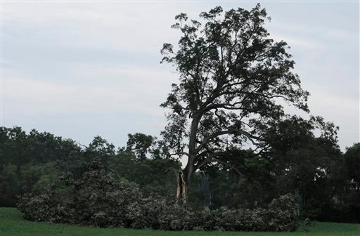 The tree outside Ohio's Malabar Farm State Park in north-central Ohio that played a key role in the the 1994 film The Shawshank Redemption appears damaged by high winds.