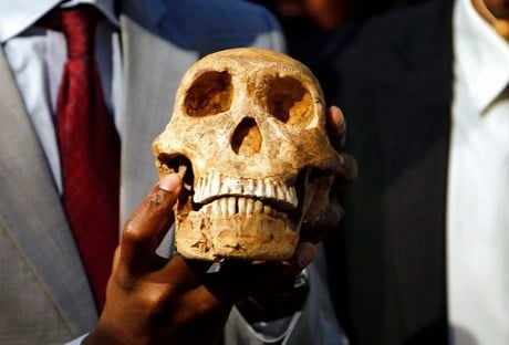 A replica skull of a species belonging to the human family tree whose remnants were first discovered in a South African cave in 2013.