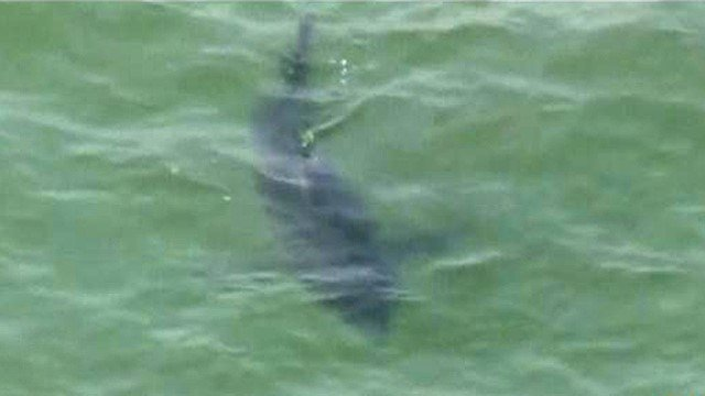 Sheriffs use chopper to warn of swarm of sharks