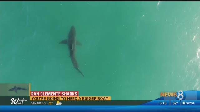 Shark Advisory Remains in Effect in Long Beach