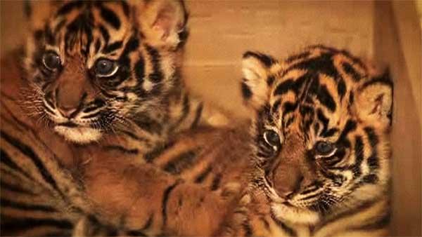 Photos courtesy of the San Diego Zoo