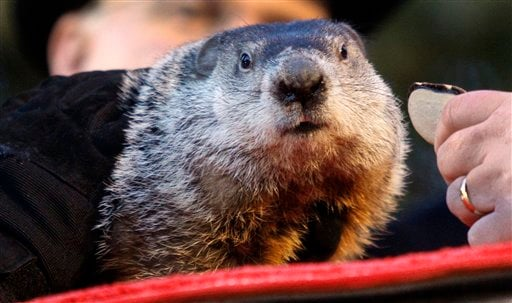 Punxsutawney Phil, the weather predicting groundhog, is placed on his stump during annual Groundhog Day festivities Feb. 2, 2011, in Punxsutawney, Pa. (AP Photo/Keith Srakocic)