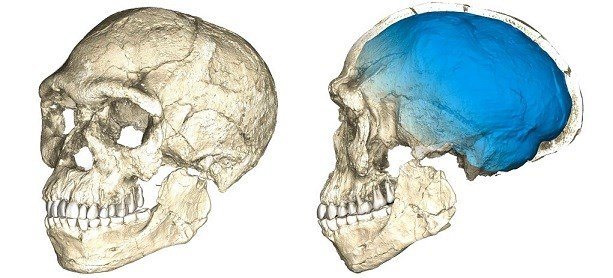 Max Planck Institute for Evolutionary Anthropology shows two views of a composite reconstruction of the earliest known Homo sapiens fossils from Jebel Irhoud (Morocco).