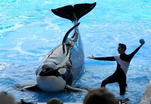 In a March 7, 2011 photo, trainer Joe Sanchez, right, works with killer whale Kayla during the Believe show in Shamu Stadium at the SeaWorld Orlando theme park in Orlando, Fla. (AP Photo/Phelan M. Ebenhack)