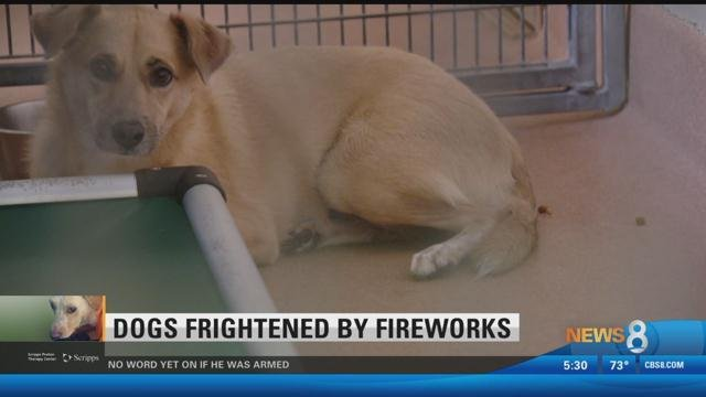 How to find lost pets after Fourth of July; one joyful reunion