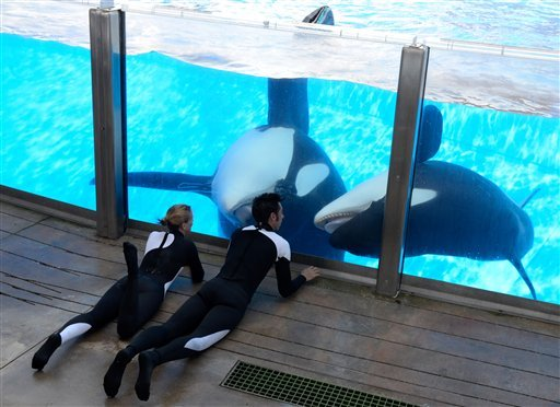 In a March 7, 2011 photo, Kelly Flaherty Clark, left, director of animal training at SeaWorld Orlando, and trainer Joe Sanchez work with killer whales Tilikum and Trua, right, during a training session at the theme park's Shamu Stadium in Orlando, Fla.