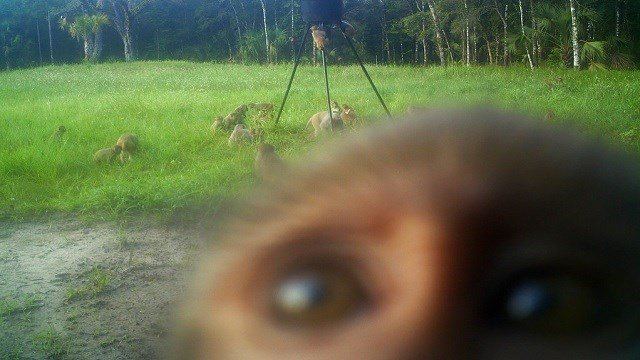 A band of non-native rhesus macaques are seen on Pritchard's property in Ocala, Fla.