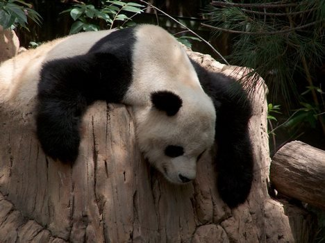 © San Diego Zoo