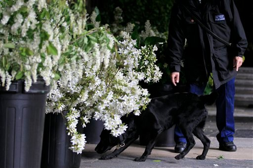 A police dog searches through the flowers brought into the Westminster Abbey in London, during preparations for the royal wedding between Kate Middleton and Britain's Prince William, Wednesday, April 27, 2011.