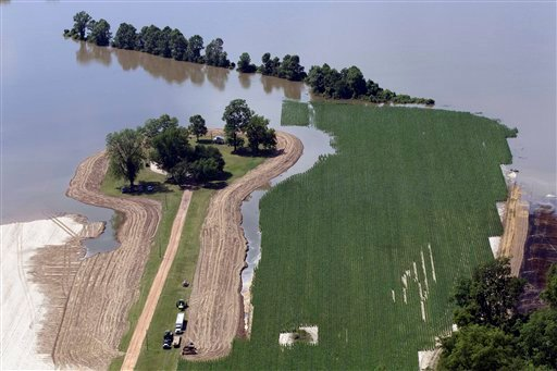 Farmers work as floodwaters from the Mississippi river creep across their fields in Natchez, Miss., Tuesday, May 17, 2011.