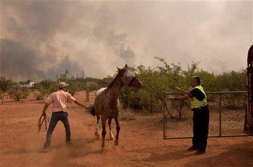 A Bisbee police officer helps Shawn Henkin load up a horse Thursday afternoon, June 16, 2011, in Hereford, Ariz. (AP Photo/The Arizona Republic, Pat Shannahan)